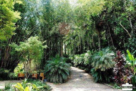 Beleza dos jardins no Inhotim