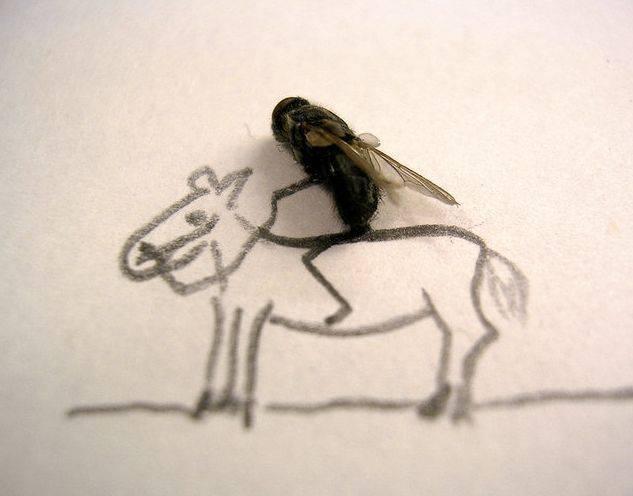 Mosca cavalgando