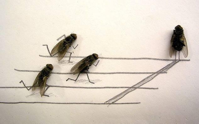 Corrida de moscas